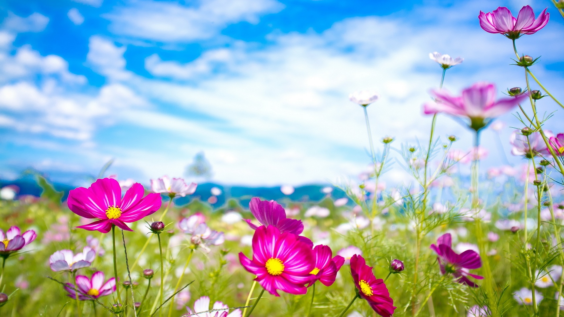 summer-flowers-wallpaper.jpg