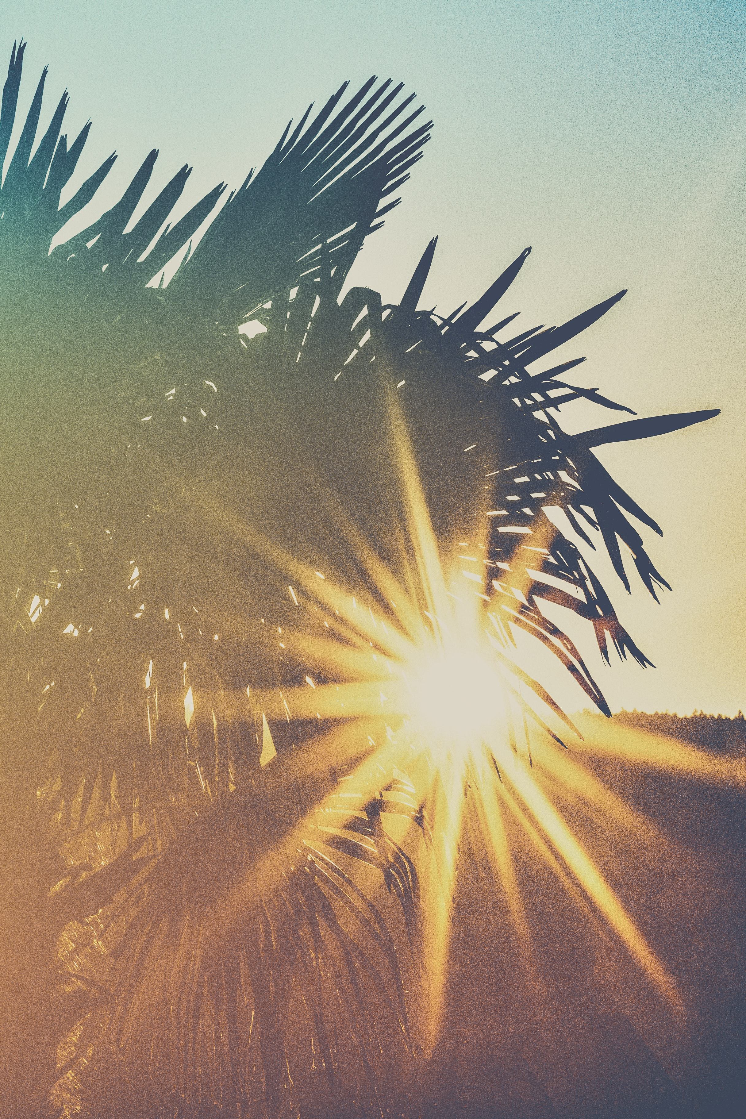 photo-of-palm-trees-during-golden-hour-2086269.jpg