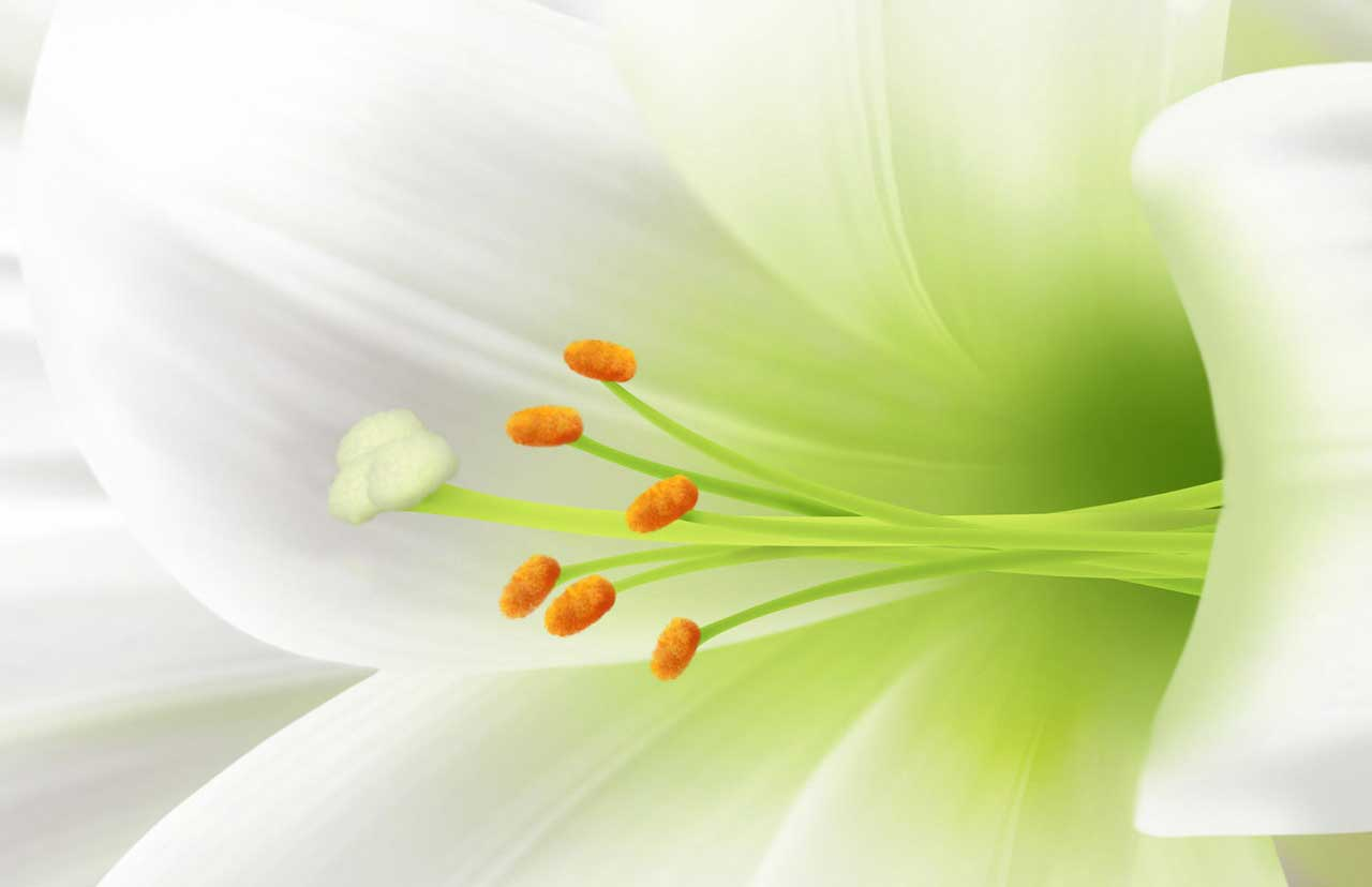 Easter-Lilly.jpg