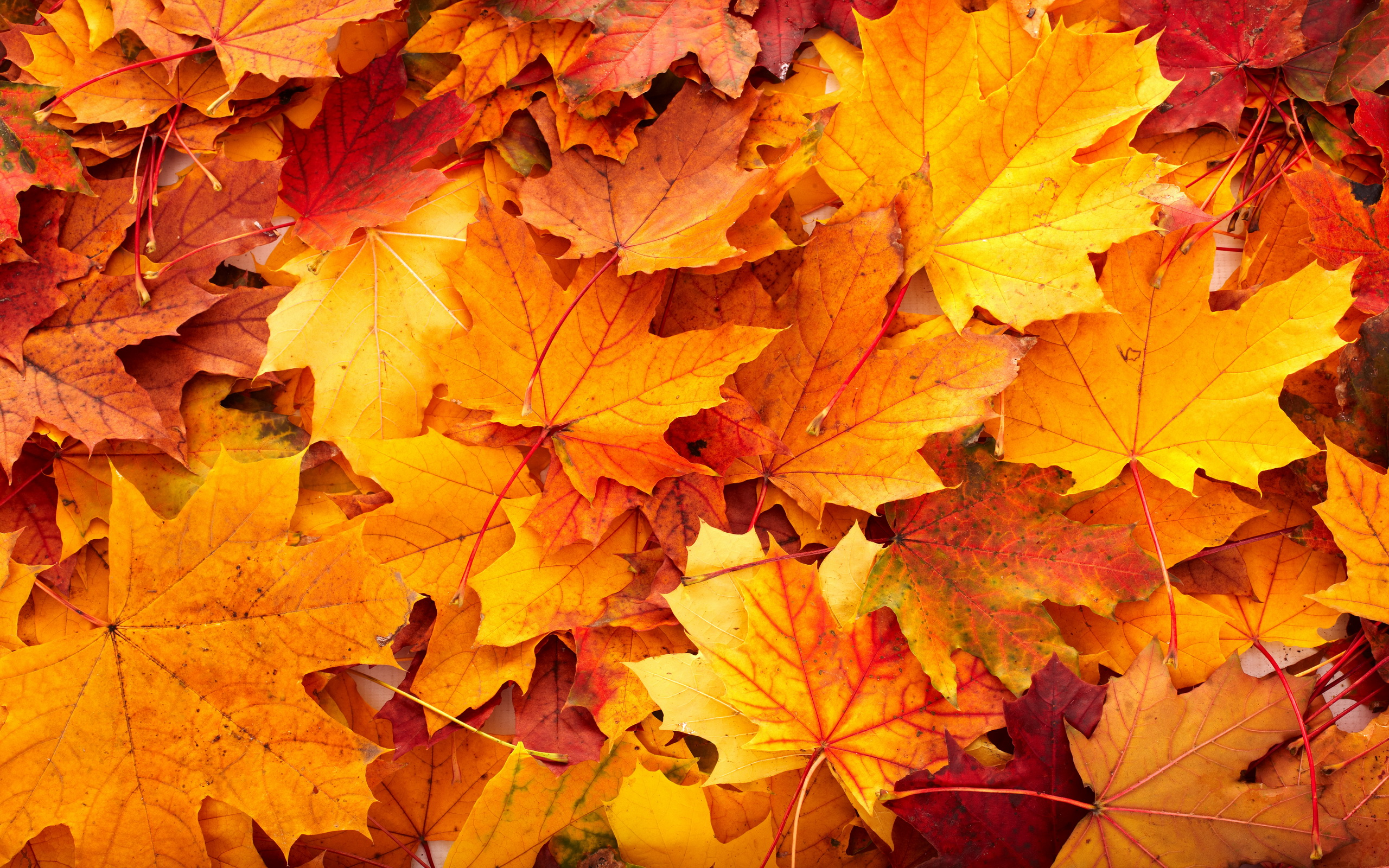 autumn-leaves-tumblr-wallpaper-1.jpg